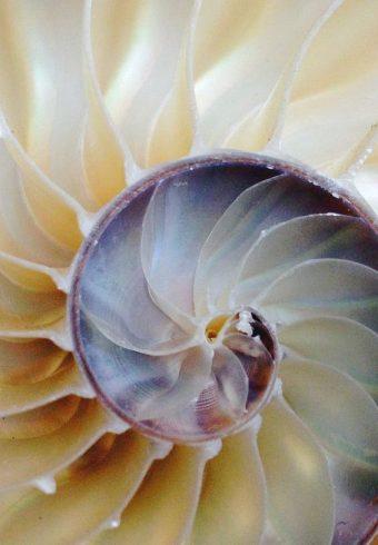 sbat schelp
